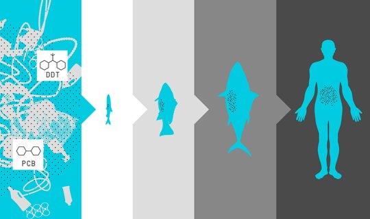plástico oceanos lixo ocean cleanup peixes homem