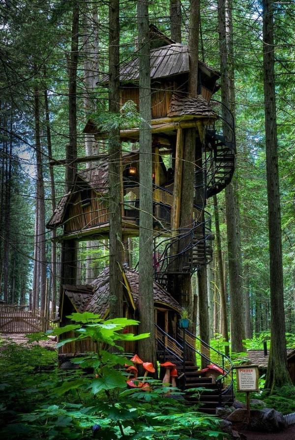 Columbia-Britanica-árvore-casaColumbia-Britanica-árvore-casa