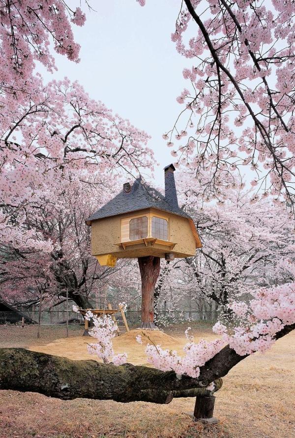 casa-de-chá-na-arvore-japao
