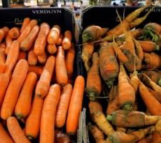cenouras intermarche-inglorious-fruits-vegetables fruta feia