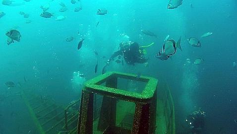 ocean-revival-mergulho-algarve-bruno freitas