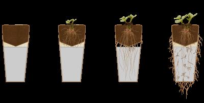 árvore urna biodegradável