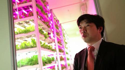 Shigeharu Shimamura agricultura indoor
