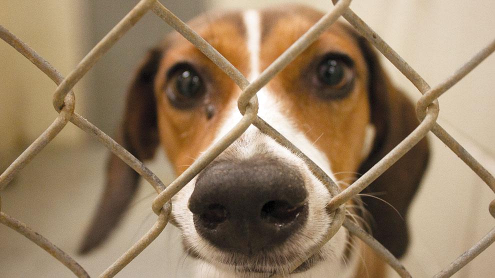 cão canil preso