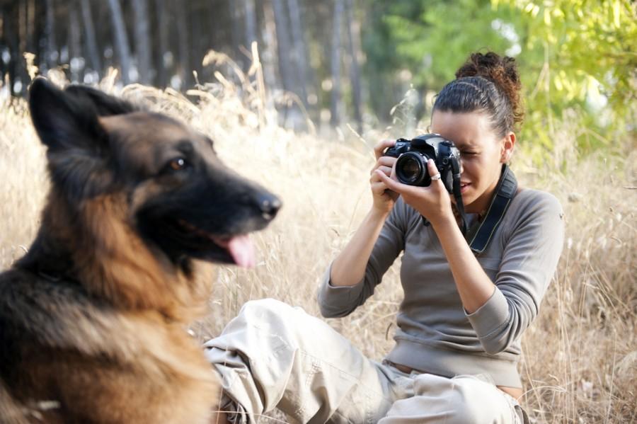 fotografo cão associação de animais dog-photographer