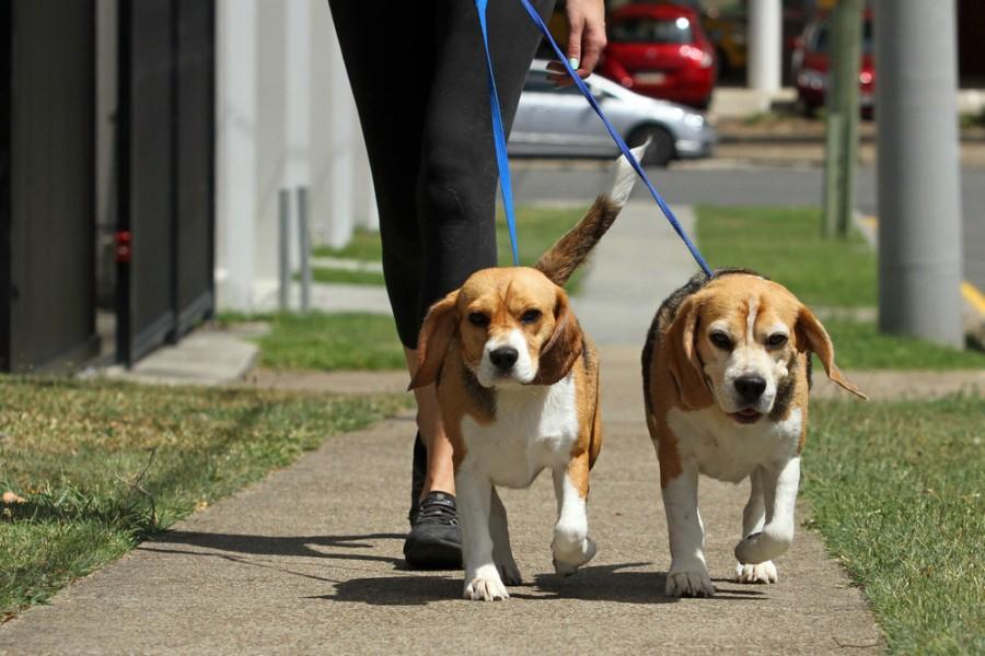 passear cães associação de animais de estimação