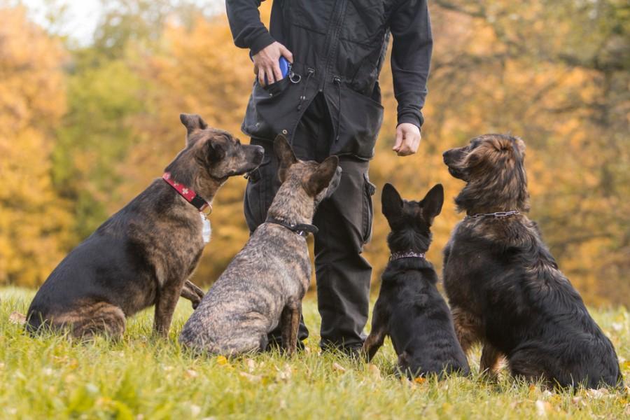 treinar cães associações de animais