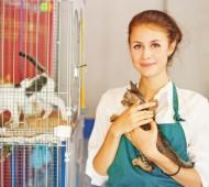voluntária trabalhador gatil gatos