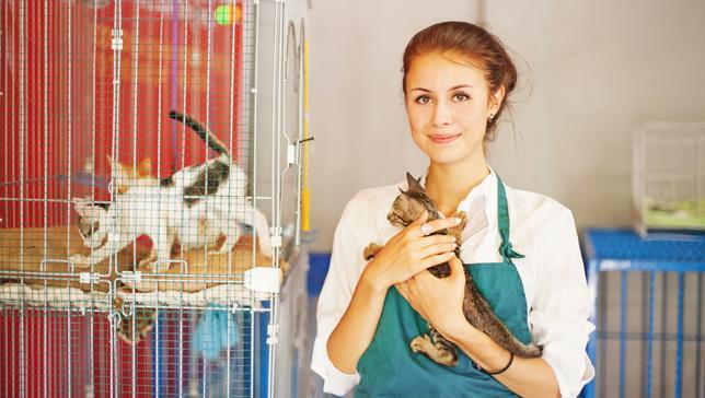 voluntária trabalhador gatil gatos, procurar emprego