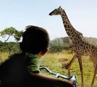 zoológico Givskud holanda safari parque
