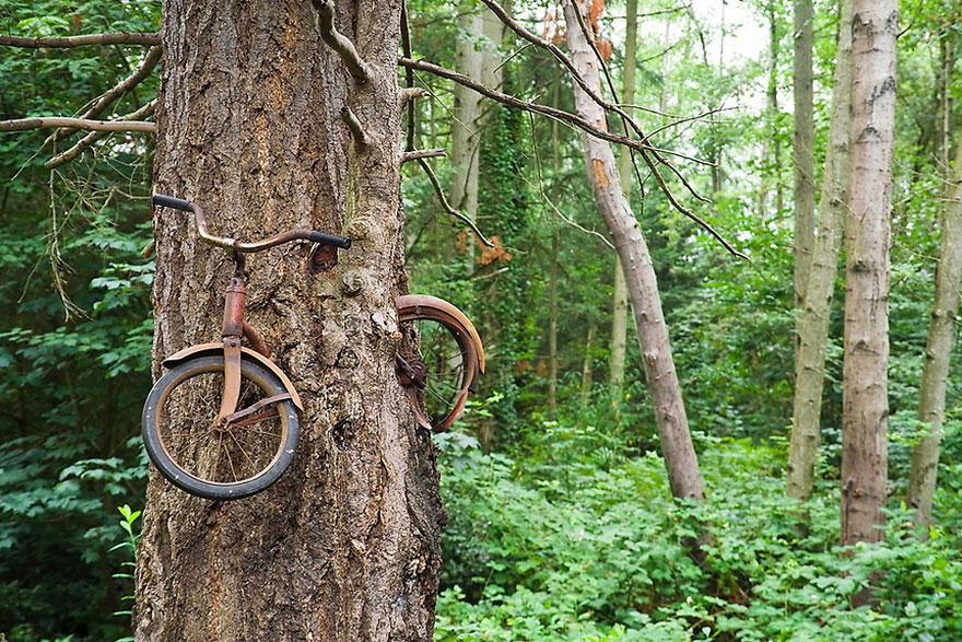 árvore bicicleta árvore