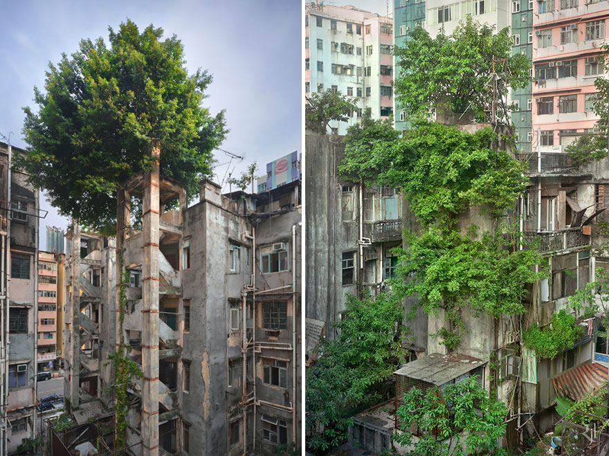 árvores edifício abandonados hong kong
