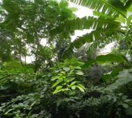 árvores floresta qualidade do ar