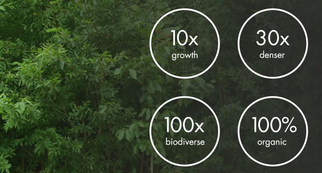 benefícios vantagens floresta