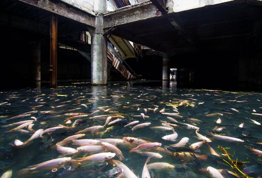 centro comercial abandonado lago peixes