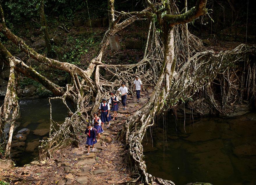 crianças educação caminhos perigosos india ponte raízes