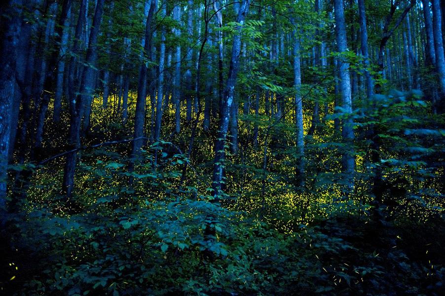 floresta noite pirilampos katrien vermeire fotografia