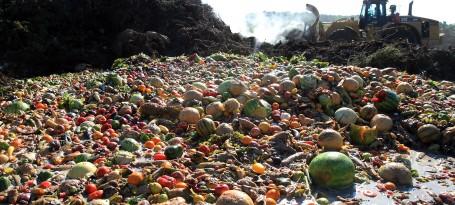 food waste desperdício alimentar comida lixo aterro