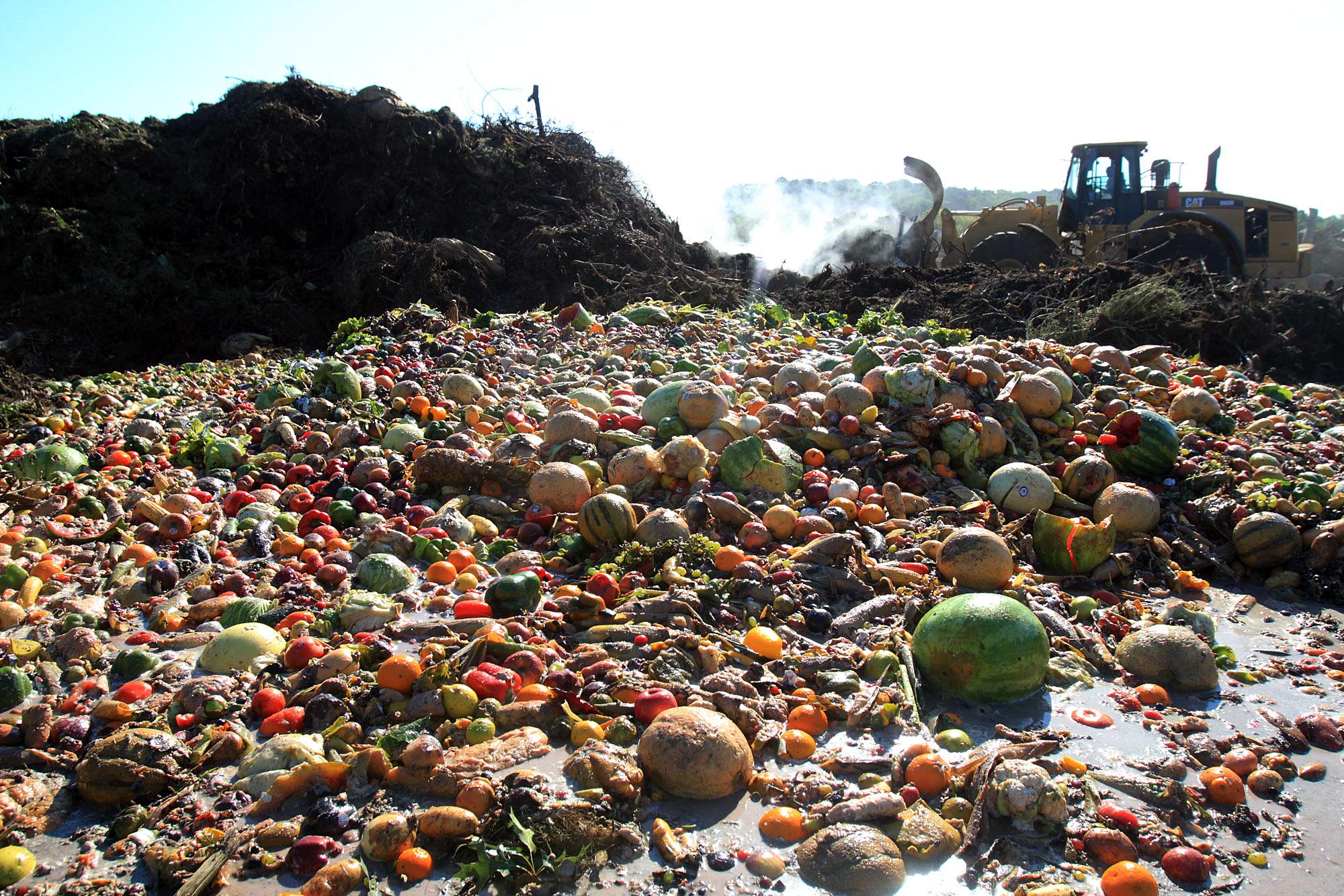 food waste desperdício alimentar comida lixo