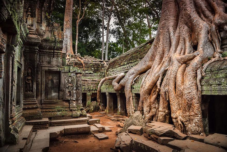 templo árvores cambodja