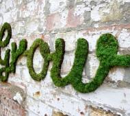 moss graffiti grow verde