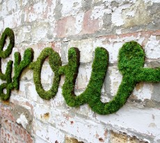 moss graffiti grow verde
