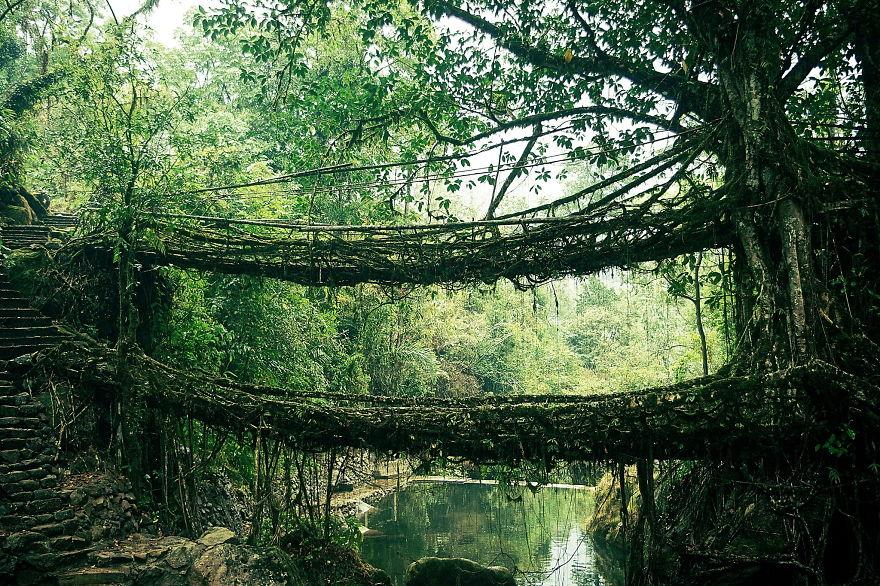 ponte de raízes índia
