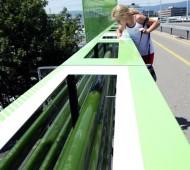 algas autoestrada genebra poluição do ar carro
