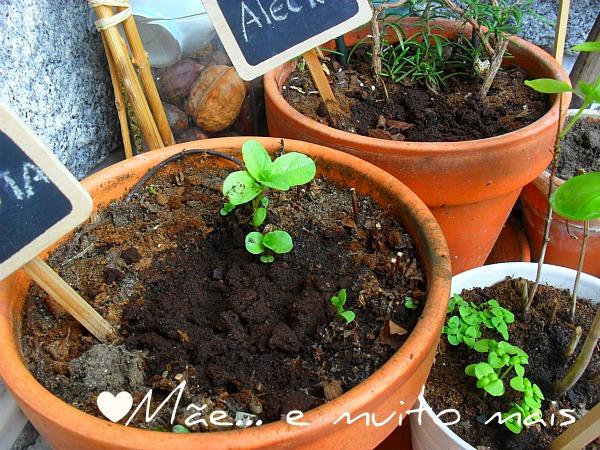 borras café plantas fertilizantes