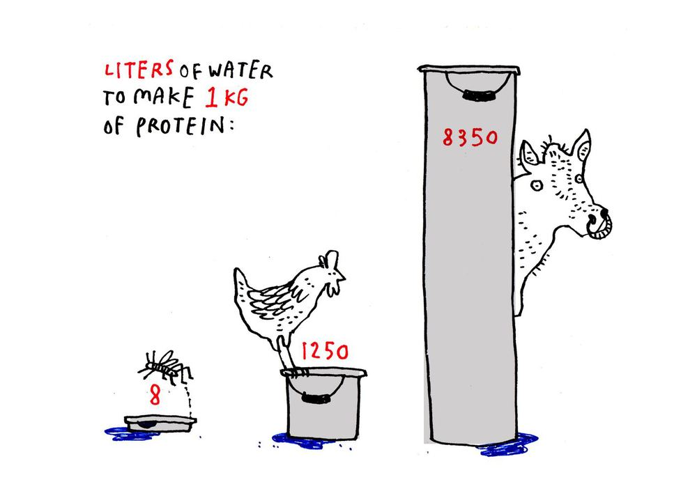 água alimentação vaca frango insetos