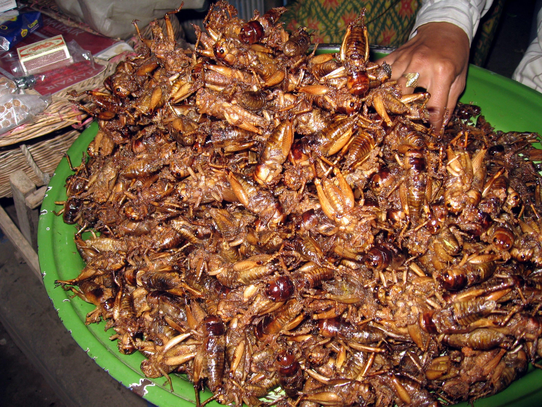 grilos fritos cambodja
