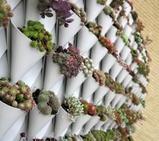 telhado verde jardim plantas vasos