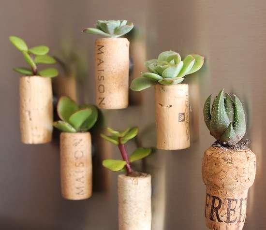 vasos plantas catos rolhas