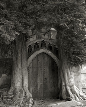 árvore com porta SENTINELS OF ST. EDWARDS