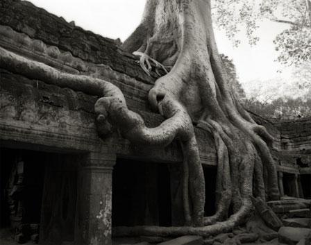 ANKOR PASSAGE árvore templo abandonado