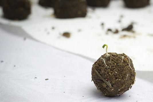 Bomba-de-sementes