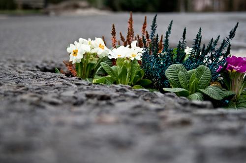 tornar as cidades mais floridas