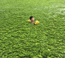 A boy swims in the algae-filled coastline of Qingdao