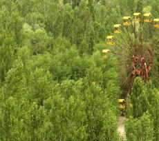Pripyat, uma cidade fantasma localizada no norte da Ucrânia, servia de casa aos trabalhadores da Central Nuclear de Chernobil, onde ocorreu o maior acidente nuclear da história, em 1986. O fotografo Igor Lishilenko registou o estado da cidade, 30 anos depois do acidente nuclear.