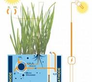eletricidade a partir de plantas