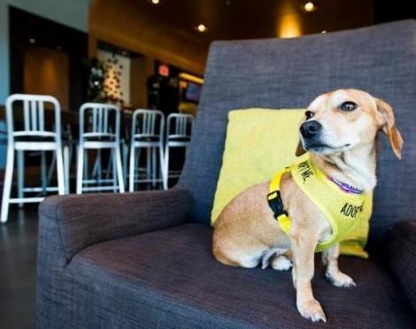 O Aloft Hotel, nos Estados Unidos da América, criou uma parceria com uma Organização local de proteção de animais, a Charlie's Angels Animal Rescue, para incentivar a adoção de cães abandonados. Os cães resgatados pela organização são levados algum tempo para o hotel, onde os hóspedes têm a possibilidade de adotá-los e dar-lhes uma nova vida.