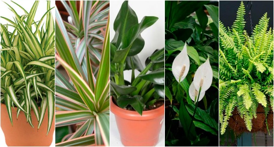 plantas que purificam o ar dentro de casa