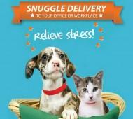 snuggle-delivery-animais nos escritórios cão gato stress