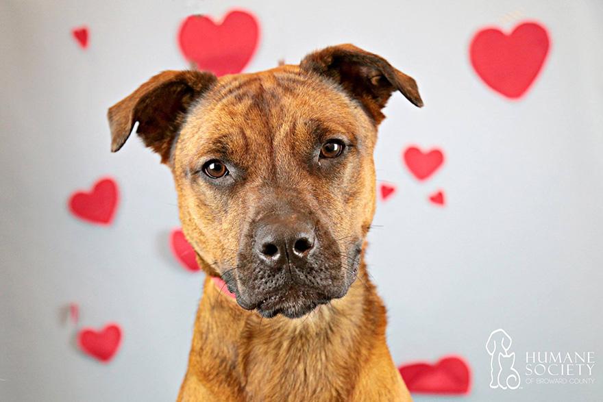 snuggle-delivery-associação de animais cão adoção