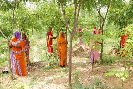Piplantri plantação árvores nascimento menina