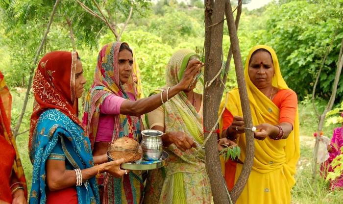Piplantri reflorestação árvores índia