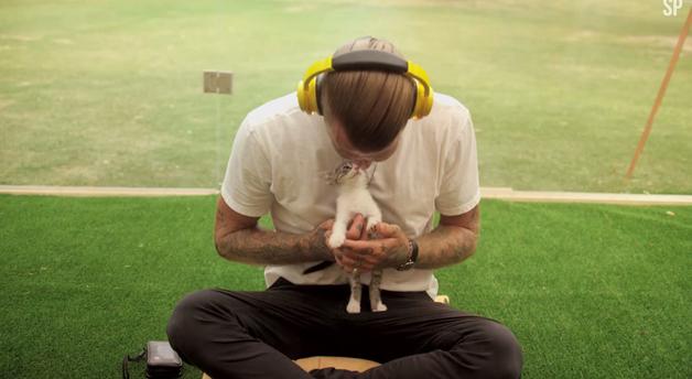 relaxamento com gatos brincar