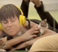 relaxar brincar com gatos