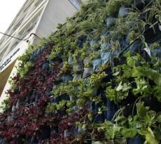fachada verde calças jardim