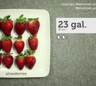 A Organização Não Governamental Grist criou um vídeo que mostra a quantidade de água que é precisa para produzir alguns dos alimentos que vão parar ao nosso prato.